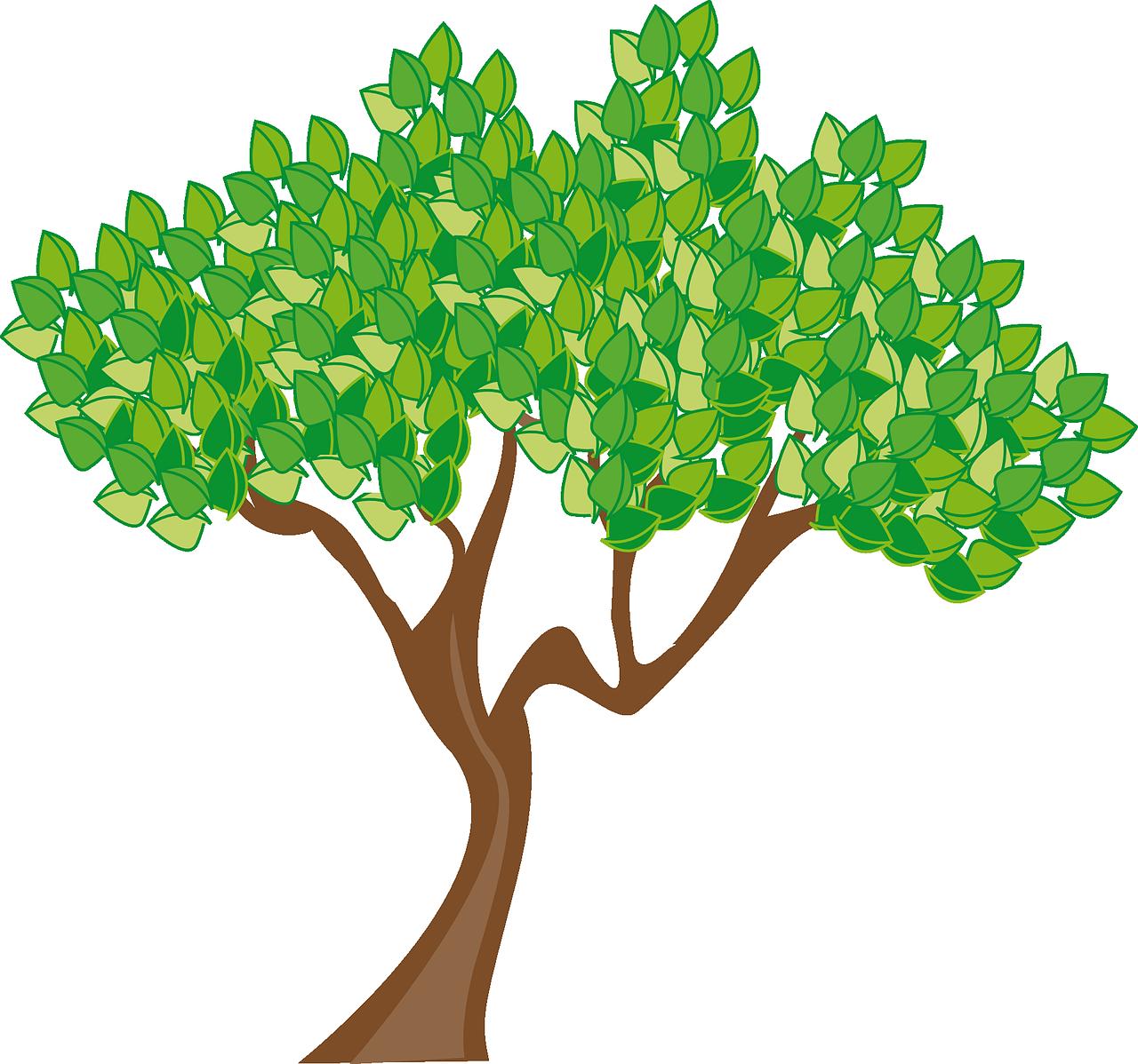 sommergrüner Baum
